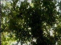 В лесу парочка осталась совсем наедине с природой